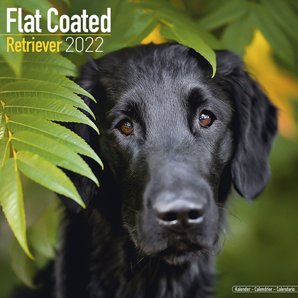 "Kalender 2021 ""Flatcoated Retriever"""