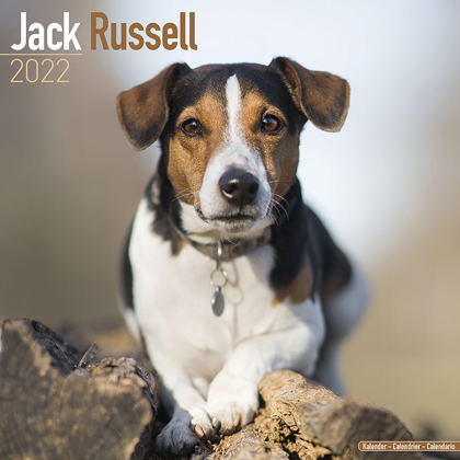 "Kalender 2019 ""Jack Russell Terrier"""
