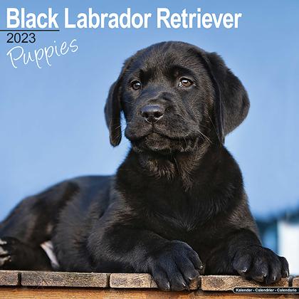 """Kalender 2018 """"Labrador Welpen (schwarz)"""""""