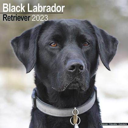"Kalender 2018 ""Labrador Retr. (schwarz)"""