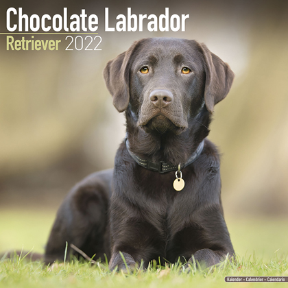 "Kalender 2018 ""Labrador Retr. (braun)"""