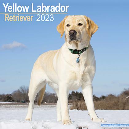 """Kalender 2021 """"Gelber Labrador Retriever"""""""