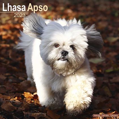 """Kalender 2021 """"Lhasa Apso"""""""