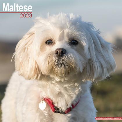 """Kalender 2019 """"Malteser Terrier"""""""