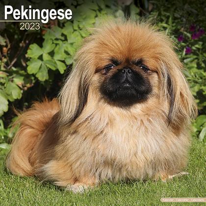 """Kalender 2021 """"Pekinese"""""""
