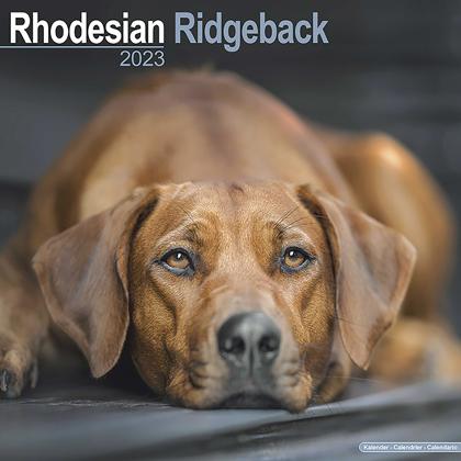 """Kalender 2021 """"Rhodesian Ridgeback"""""""