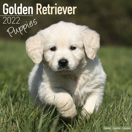 "Kalender 2021 ""Golden Retriever Welpen"""
