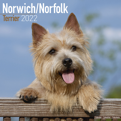 "Kalender 2021 ""Norwich/ Norfolk Terrier"""