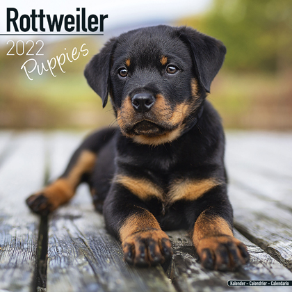 """Kalender 2021 """"Rottweiler puppies"""""""