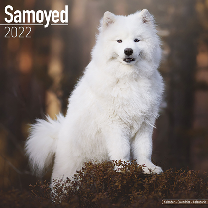 "Kalender 2019 ""Samojeed"""