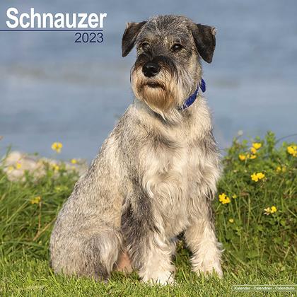 """Kalender 2019 """"Schnauzer"""""""