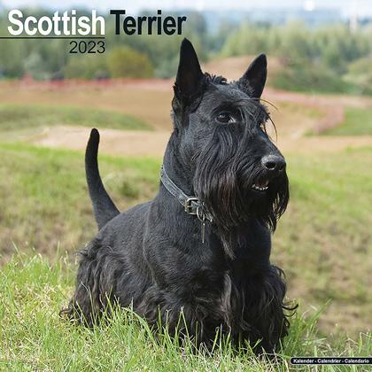 """Kalender 2021 """"Scottish Terrier"""""""