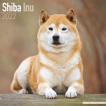 "Kalender 2021 ""Shiba Inu"""