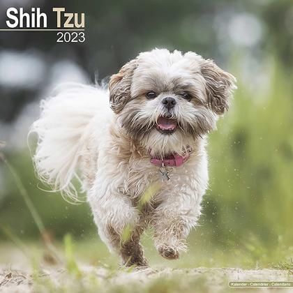 "Kalender 2021 ""Shih Tzu"""