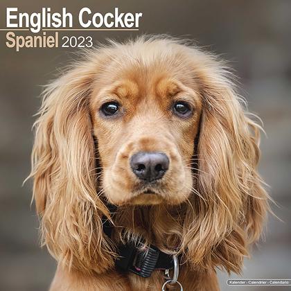 "Kalender 2019 ""Cocker Spaniel"""