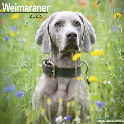 """Kalender 2021 """"Weimaraner"""""""