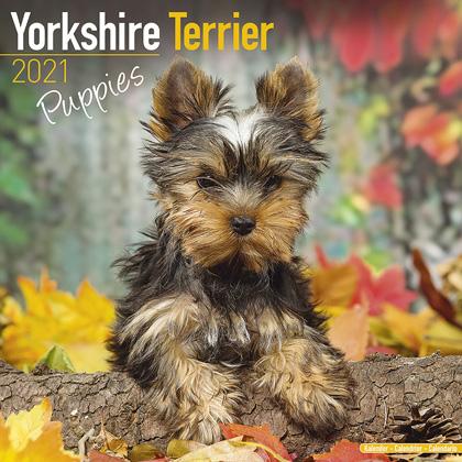 "Kalender 2021 ""Yorkshire Terrier Puppies"""