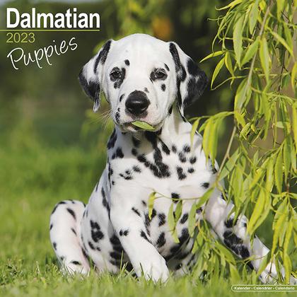 "Kalender 2022 ""Dalmatiër Puppies"""