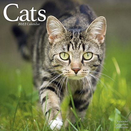 """Kalender 2018 """"Katzen"""""""