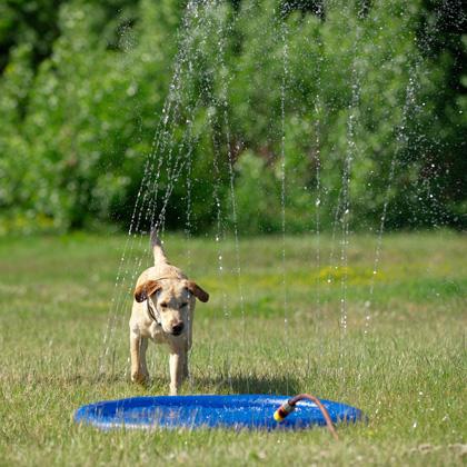 """Honden waterspeelgoed """"Splash Pool Water Sprinkler"""""""