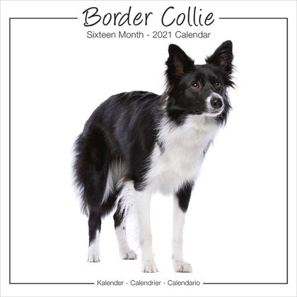 "Studio Kalender 2021 ""Border Collie"""