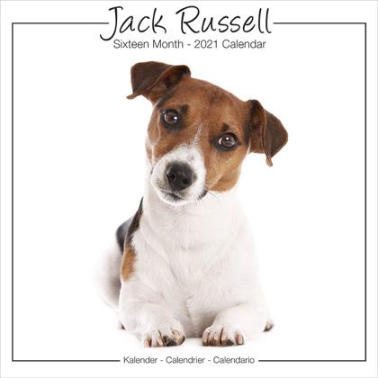 "Studio Kalender 2021 ""Jack Russell"""