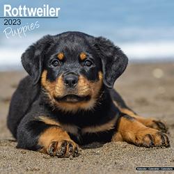 Hundekalender 2021 Rottweiler Welpen