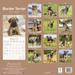 """Kalender 2020 """"Border Terrier"""""""