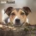 "Kalender 2021 ""Jack Russell Terrier"""