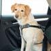 "Kurgo Autosicherheitsgeschirr ""Impact Seatbelt"""