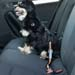 "Kurgo Autosicherheitsgurt ""Direct to Seatbelt"""