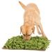 Doggytools Hunde-Schnüffelrasen