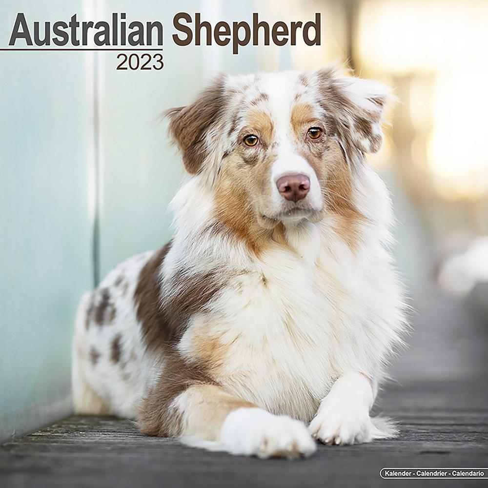 Hundekalender 2019 Australian Shepherd