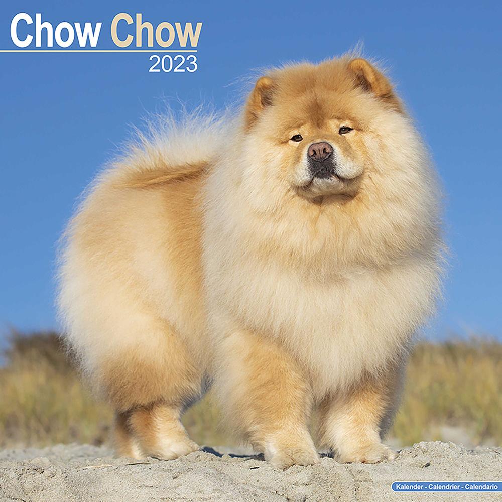Kalender 2022 Chow Chow