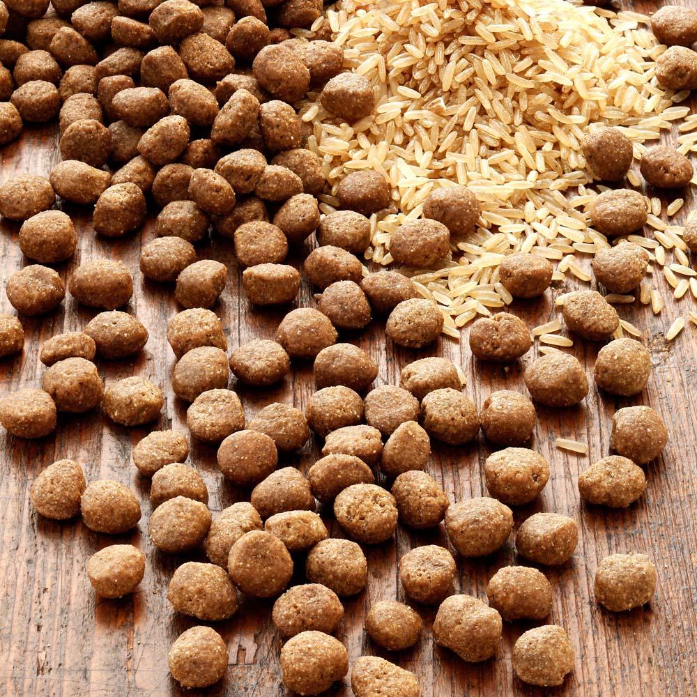 alsa-nature INSECTUM Reis Trockenfutter, 6 kg - alsa-hundewelt