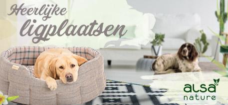 Hondenbedden & voerbakken